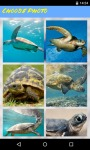 Turtle Jigsaw Puzzle FREE screenshot 1/5