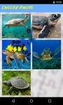 Turtle Jigsaw Puzzle FREE screenshot 2/5