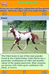 The Horse Breeds screenshot 3/3