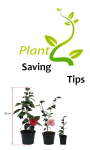 Plant Saving Tips screenshot 1/1